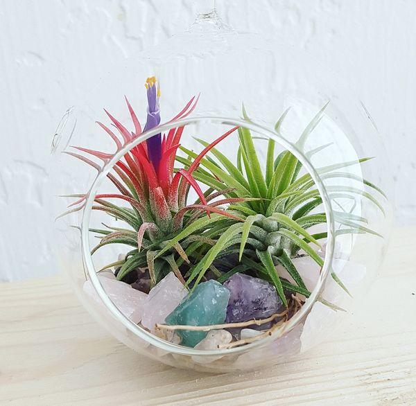 Small Globe Glass Terrarium