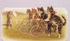 At the Start. Vintage Illustration Greeting Card of Cats Having a Bicycle Race.
