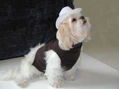 Dog Vests: Micro-Suede Cowboy Dog Vest Outfit by Alexis Handmade USA