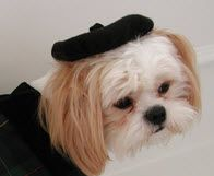 Dog Hats: Felt Beret Hat for Dogs Made in USA by Alexis Creations