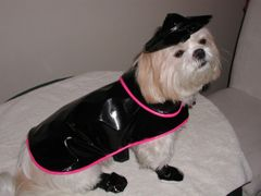 Dog Raincoats: Shiny Pleather Dog Raincoat with Cotton Liner