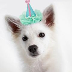 Dog Party Hats: Pretty Party Clip-on Hat for Dogs in Various Colors by Mirage