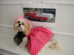 Dog Dresses: Handmade '50's REMEMBERED' Cotton Pink w/Black Polka Dots Dog Dress