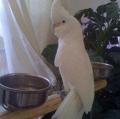Home At Last Parrot Sanctuary