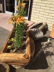 Pine Wood Rectangle Planter Boxes