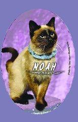 "Noah ""The Charmer"" Button/Magnet"