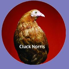 Cluck Norris Button/Magnet