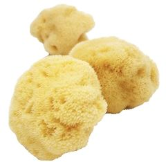 Natural Facial Sponge. Small & soft to easily rinse facial areas. Naturally renewable resource.