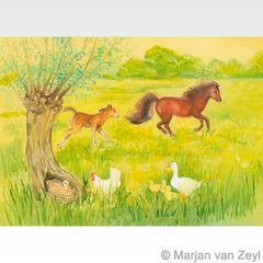 Frisky Foal in Meadow postcard