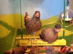 Chick Swing