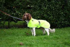 "Woofmasta Dog Coat Delux Fluorescent Yellow 12"""