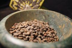 Acacia tortilis Umbrella Thorn 6 seeds