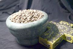 400 A+ Organic Argyreia nervosa Hawaiian Baby Woodrose Seeds