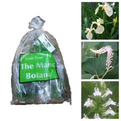Marginal Pond Water Plants - White Collection - The Manic Botanic®