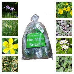 The Manic Botanic® Pond Plant Mix of 8 Varieties
