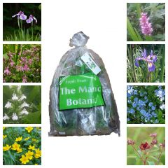 The Manic Botanic® Pollinating Pond Plant Mix of 8 Varieties - Bee Friendly!