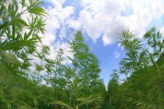 Ganja-Grow.com