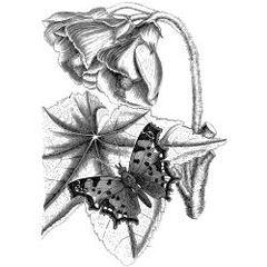 LaBlanche Silicone Stamp-Elegant Flower