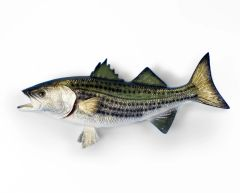 "Striped Bass 18"""
