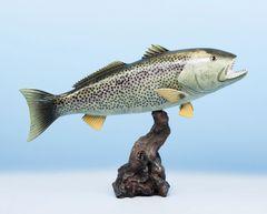 """TT232 Weakfish 20"""""""