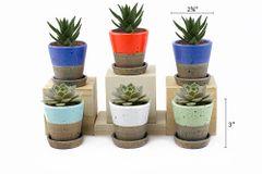 MP4 Mini Pots Set of 12 pcs