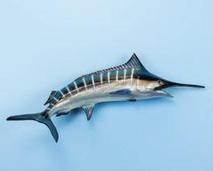 """TT401 Blue Marlin 22"""" Fish Mount"""