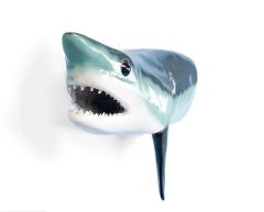 """FF101 Mako Shark 36"""""""