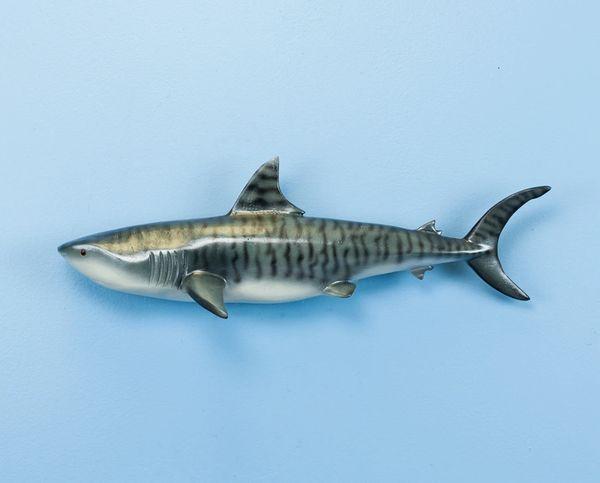 """Tiger Shark 18"""""""