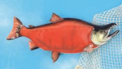 "TT601 28"" Sockeye Salmon Fish Mount"