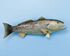 "TT432 Weakfish 20"" Fish Mount"