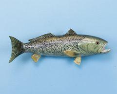 "TT332 Weakfish 14"" Fish Mount"