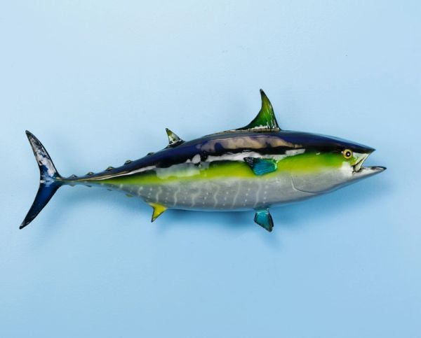 "TT619 Yellowfin Tuna 24"" Wall Mount"