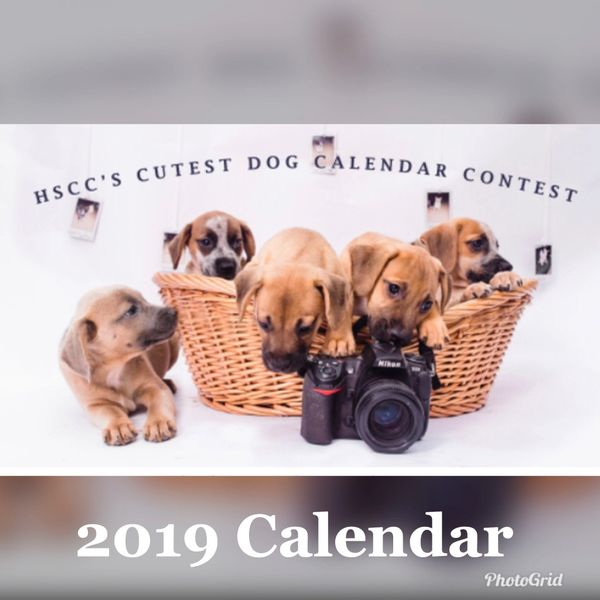 2019 Dog Calendar Humane Society Of Calvert County