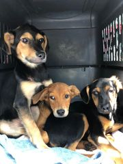 Vet care for new puppies