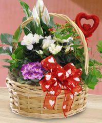 """Valentine's """" Dish Garden"""" Plants Basket"""