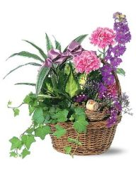 """Mother's Day """"Bird's Nest Dish Garden"""" Choose Size/Price STARTING AT"""