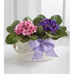 "Double 4"" plant basket (plants vary)"