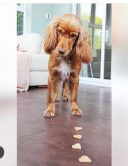 Pet Goodie Box -Plan1 £5.50/Month