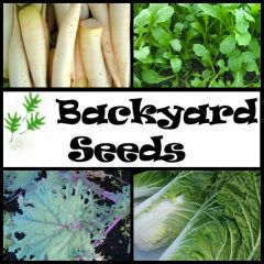 Autumm Vegetable 4 Pack: Daikon, Kale, Rocket, Wong Bok