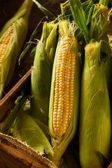 Sweet Corn - Balinese