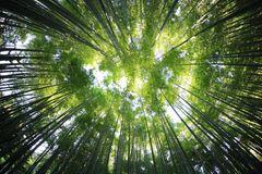 North Central Florida Bamboo Plants