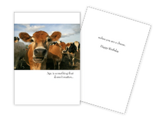 Sun Day Greeting Cards