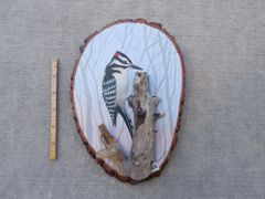 Woodpecker (small)