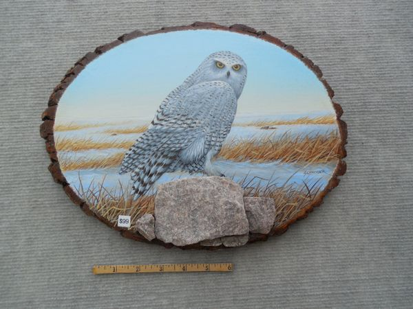Owl (snowy) (Medium)