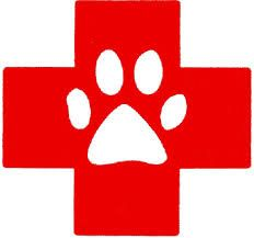 Pet First Aid Training