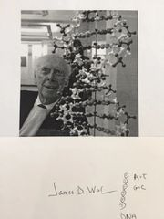 JAMES WATSON SIGNED ORIGINAL SKETCH OF DOUBLE HELIX DNA STRAND