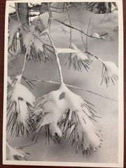 ANSEL ADAMS HAND SIGNED PHOTO LITHOGRAPH PINE BRANCHES, SNOW, YOSEMITE VALLEY, CALIFORNIA