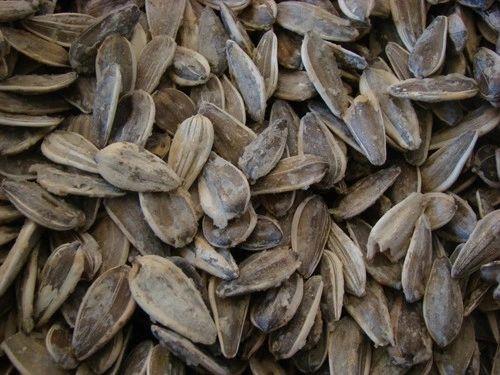 Pistachio - Sunflower Seeds Roasted Extra Salted