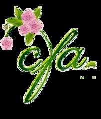 Renewal - CFA MEMBER