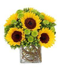 Sunflower Surprise - fal15